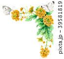 菜の花 花 フレームのイラスト 39581819