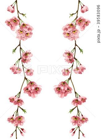枝垂れ桜のタテボーダーフレーム連続用 39583096