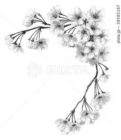 水彩で描いた桜のフレーム素材モノトーン 39583167