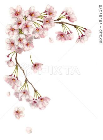水彩で描いた桜のフレーム素材モノトーン 39583170