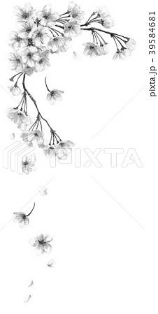 水彩で描いた桜のフレーム素材モノトーン 39584681