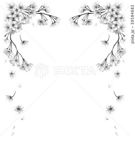 水彩で描いた桜のフレーム素材モノトーン 39584683