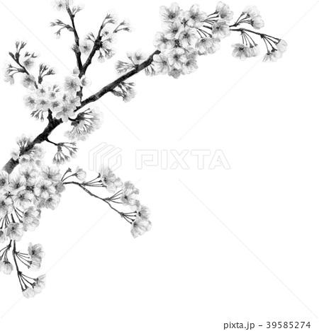 水彩で描いた桜のフレーム素材モノトーン 39585274