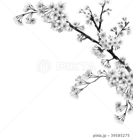 水彩で描いた桜のフレーム素材モノトーン 39585275
