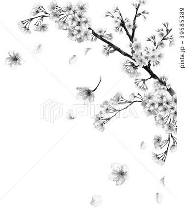 水彩で描いた桜のフレーム素材モノトーン 39585389