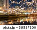 夜桜 夜景 紫川の写真 39587300