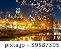 夜桜 夜景 紫川の写真 39587305