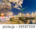夜桜 夜景 紫川の写真 39587309
