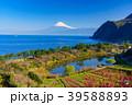 《静岡県》花桃咲く西伊豆井田 海越しの富士山 39588893