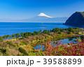 《静岡県》花桃咲く西伊豆井田 海越しの富士山 39588899