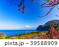 花桃 富士山 海の写真 39588909