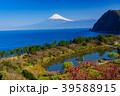 《静岡県》花桃咲く西伊豆井田 海越しの富士山 39588915