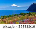 《静岡県》花桃咲く西伊豆井田 海越しの富士山 39588919