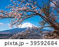 桜 富士山 春の写真 39592684