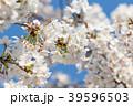 桜と青空 39596503