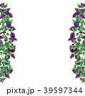 バジル パセリ オランダゼリのイラスト 39597344