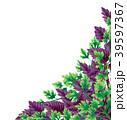 飾り バジル 角のイラスト 39597367