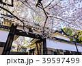 千代田区 城 春の写真 39597499