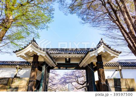 日本の桜 Cherry blossoms 39597500