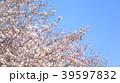 桜 39597832