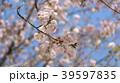 桜 39597835