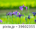 植物 花 花菖蒲の写真 39602355