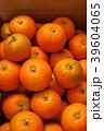 庭の橙の実 39604065