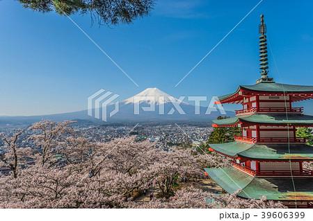 富士山と桜1 39606399