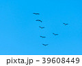 Migrating Common Cranes in  V formation 39608449
