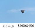 Flying Grey Heron by a blue sky 39608450