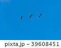 Migrating waterfowls by a clear blue sky 39608451