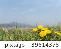 春の日差しと野原のタンポポ 39614375