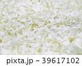 花弁 花びら 白の写真 39617102