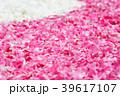 花弁 花びら ピンクの写真 39617107