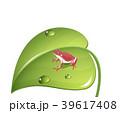 葉っぱに止まる赤カエル (frog on the green leaf) 39617408