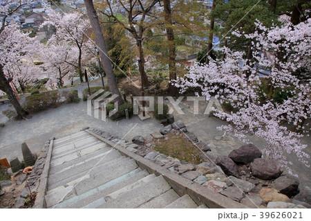 丸岡城 (霞ヶ城) サクラ 39626021