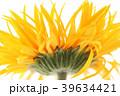 写真 フォトグラフ お花の写真 39634421
