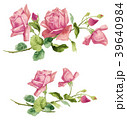 ローズ バラ 水彩画のイラスト 39640984