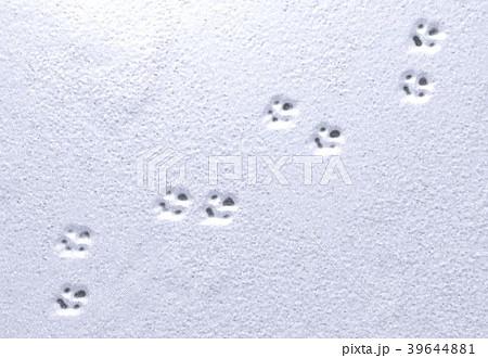 Paw prints in snow. 3d illustration 39644881