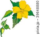 山吹の花 39648880