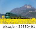 ゆふいんの森 電車 春の写真 39650491