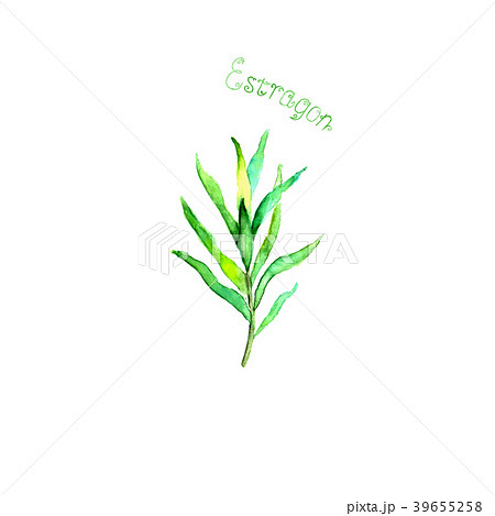 Estragon herb spice isolated on white background 39655258