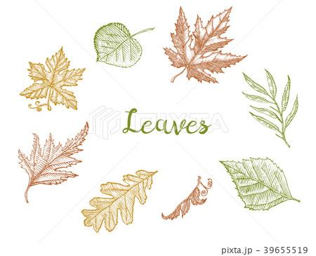 Leaves set, Flower and medicinal herb. Rustic 39655519