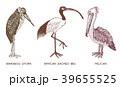 Pelican and African sacred ibis and storks 39655525