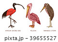 Pelican and African sacred ibis and storks 39655527