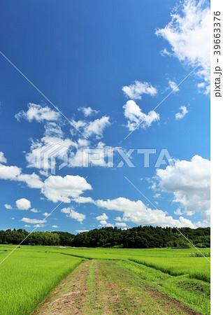 夏の青空と田園風景 39663376