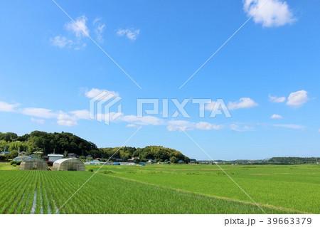 夏の青空と広い田んぼ風景 39663379