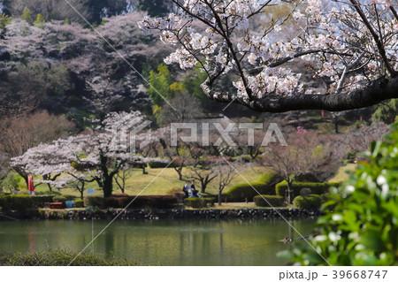 【東京都】早春の町田市薬師池公園 39668747