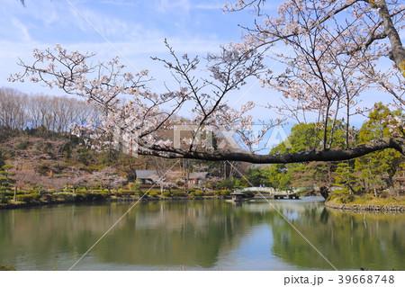 【東京都】早春の町田市薬師池公園 39668748