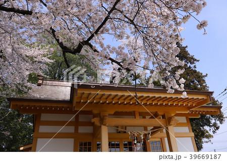 【山梨県】韮崎市 武田廣神社の拝殿と桜 39669187